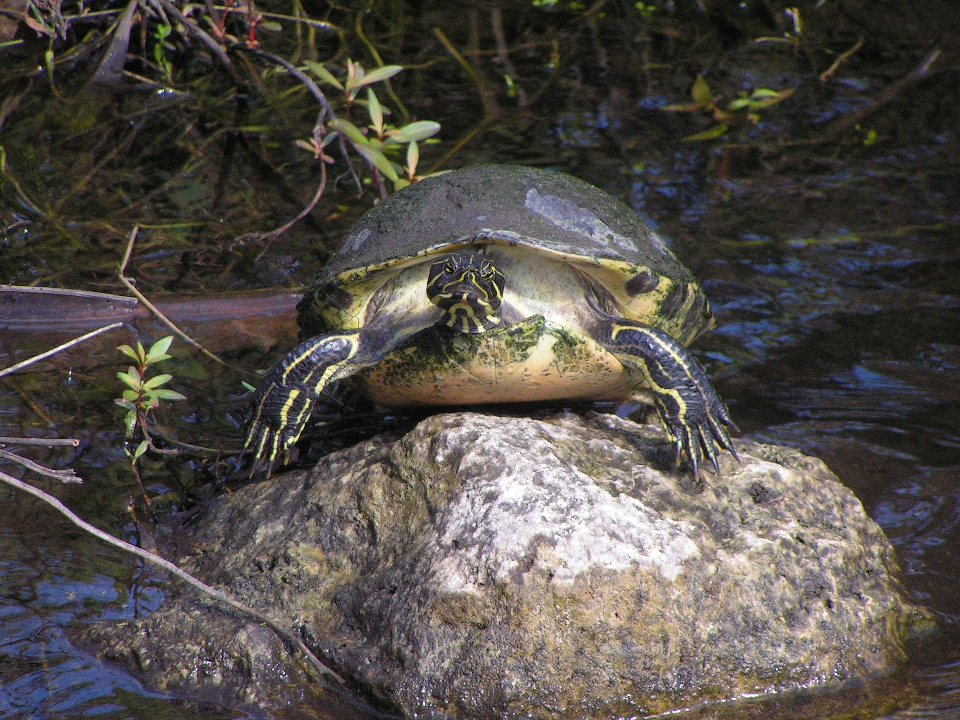 turtle-1286217_1920