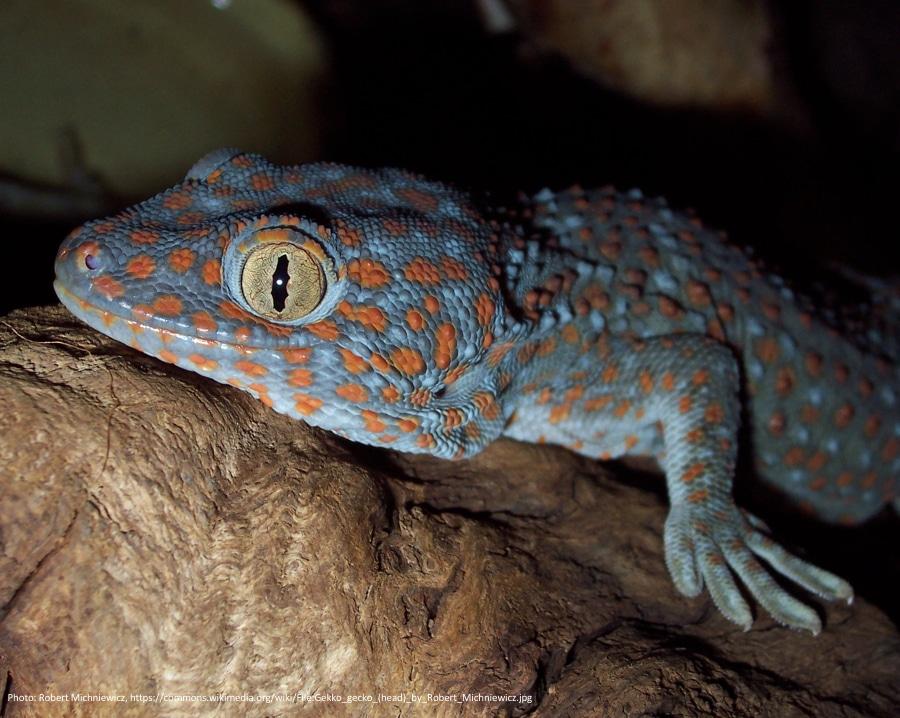 Billede1+forside g. gekko