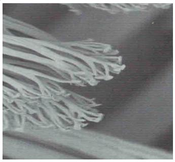 Spatulastrukturerne (11000x forstørrelse)