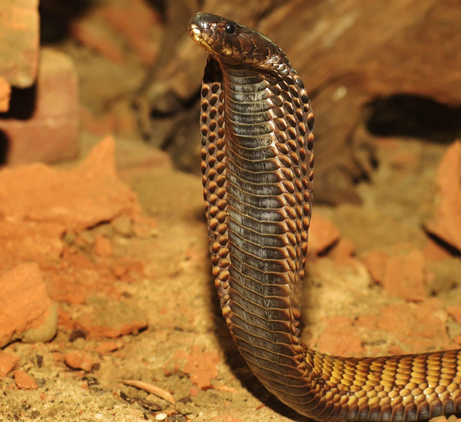 snake-2749383