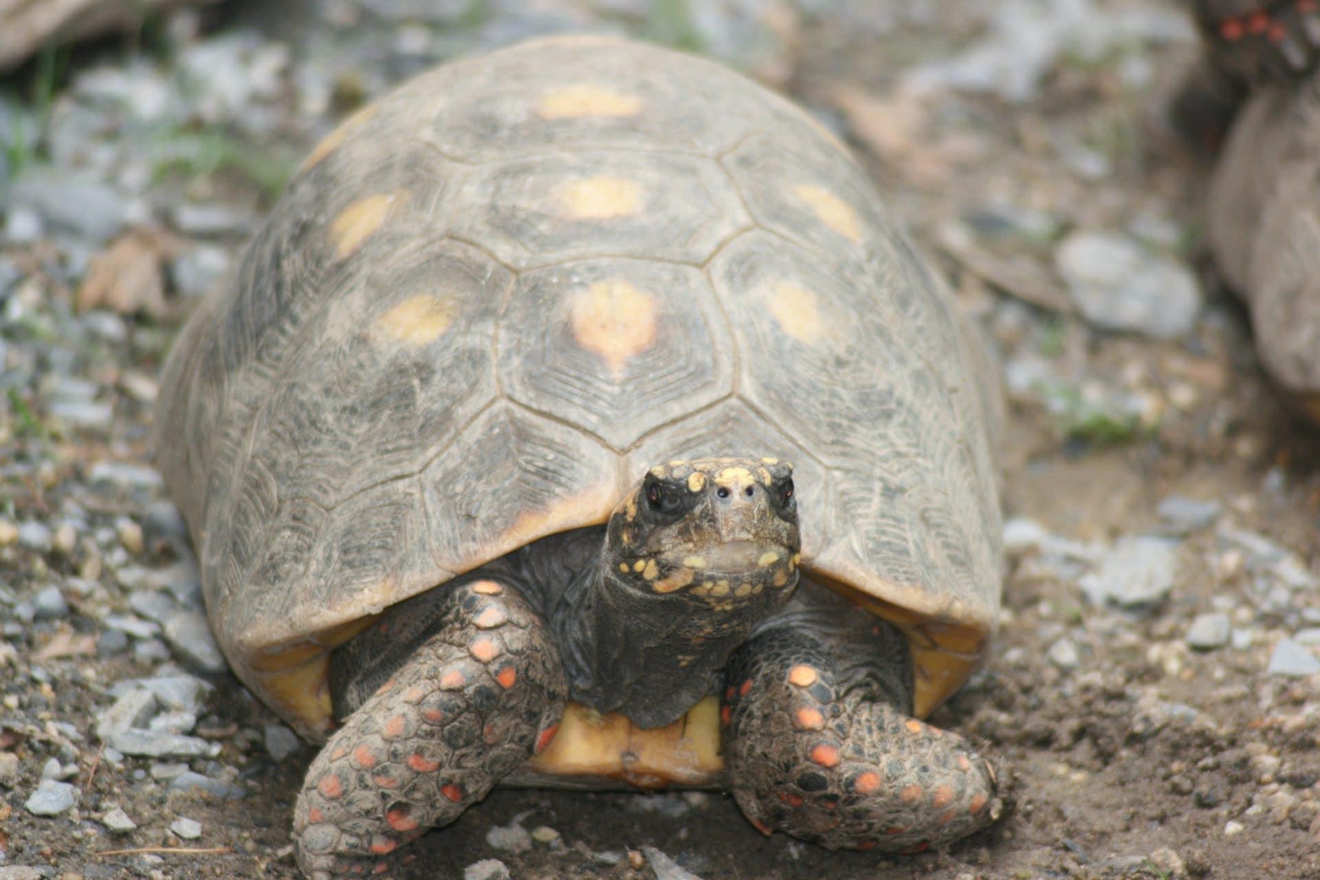 turtle-2834495
