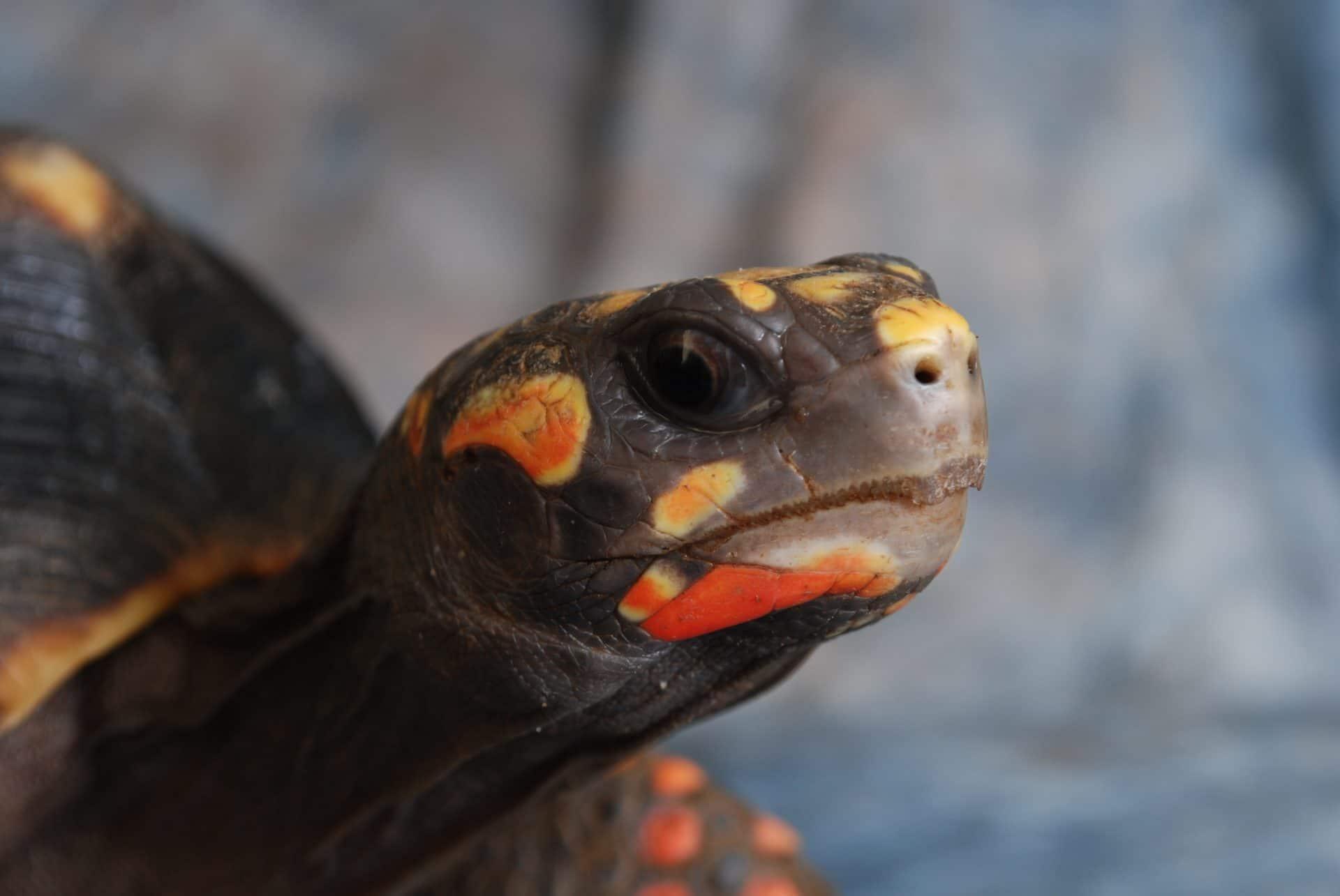 turtle-2904424